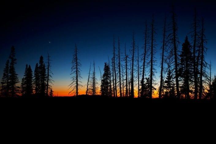dark forest in utah