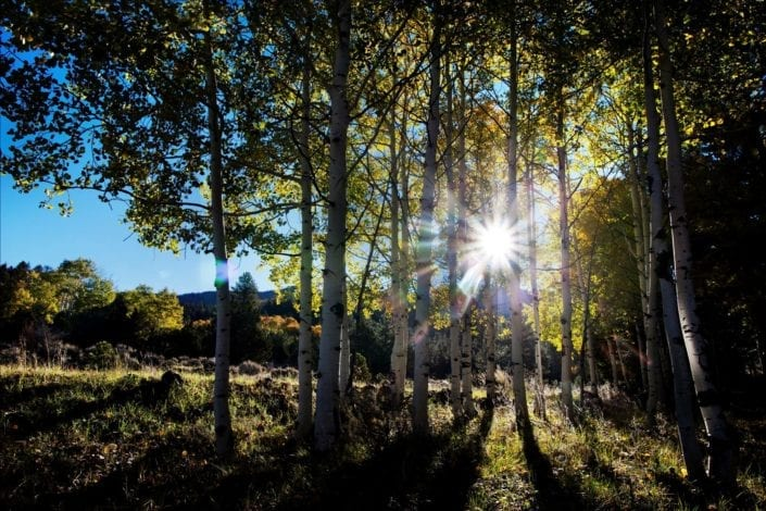 forest in utah