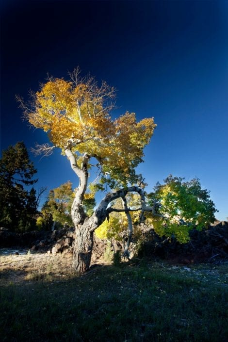 tree with open sky utah